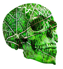 abstract green skull isolated on white