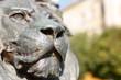 Brave lion head
