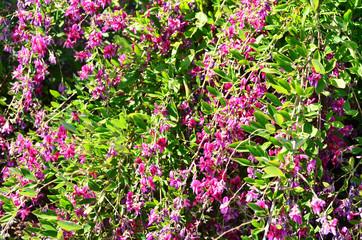 purple flowers background