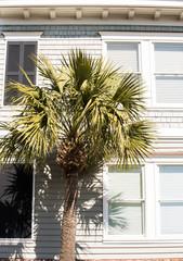 Palm Tree by Wood Siding Home