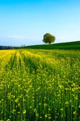 Single Tree in Fields