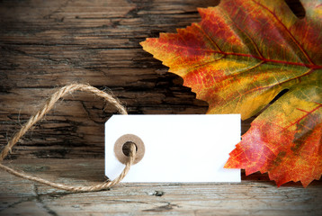 Background with Empty Label and Autumnal Decoration