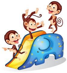 Monkeys and slide