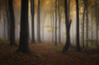colorful autumn in a misty forest