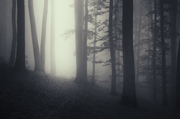 light beam in dark misty forest