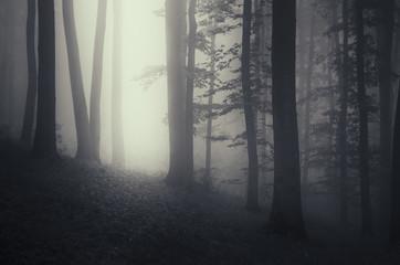 light beam in dark misty forest