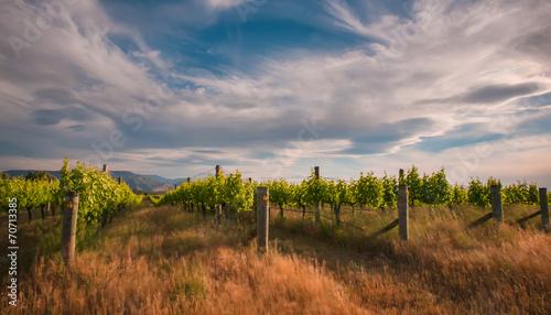 new zealand vineyard near Blenheim under a dramatic sky