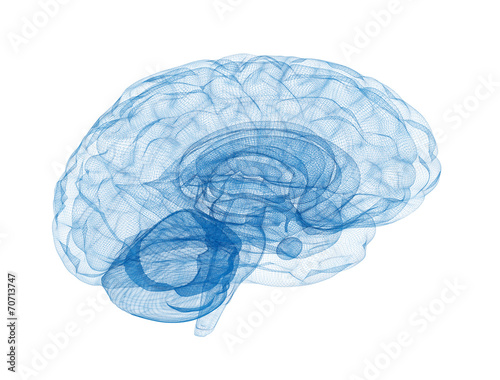 Brain wireframe model isolated on white background