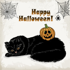 Halloween card with a cat, pumpkin, spider and spider web