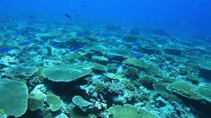 Beautiful coral reef in the indian ocean