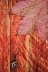 autumn snail leaf wood background