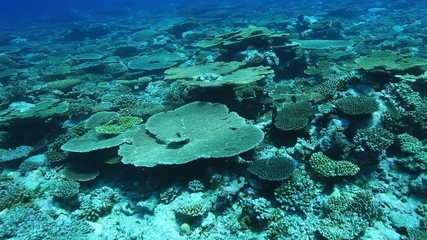Tropical coral reef in the indian ocean