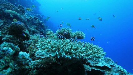 Coral reef and small fish