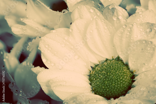 Close-up of young fresh flowers in spring. Vintage © Photocreo Bednarek
