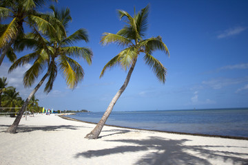 Palm Tree in Key West