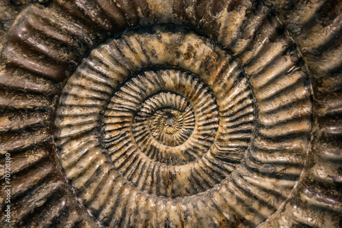 Close up of a prehistoric snail fossil - 70720380