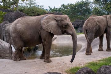Elephants in the zoo of Taipei, Taiwan