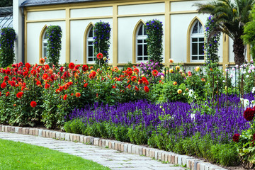 Farbenfrohes Blumenbeet - Dahlien und wilder Salbei