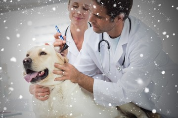 Composite image of veterinarians examining ear of dog