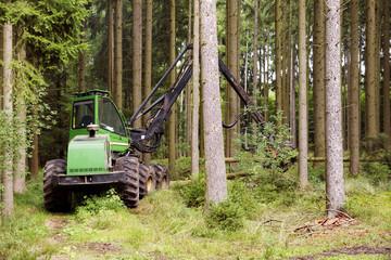 Holzvollernter bei Durchforstung