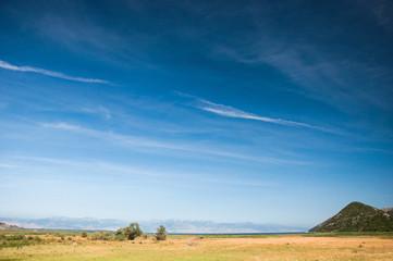 Minimal summer landscape