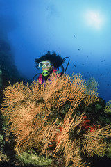 Italy, Tyrrhenian Sea, diver and yellow gorgonians