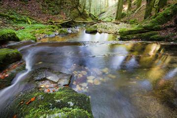 Nature dans le massif des Bornes