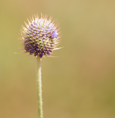 flower bud on a prickly plant