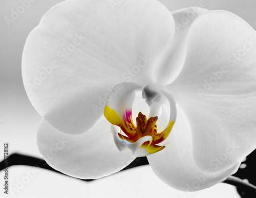 canvas print picture weiße Orchidee