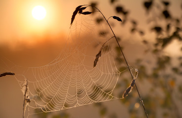 misty sunrise and spiderweb