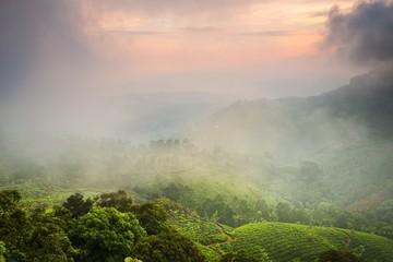 Tea plantations.Kerala.India