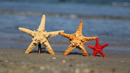 Three starfish on the beach in summer