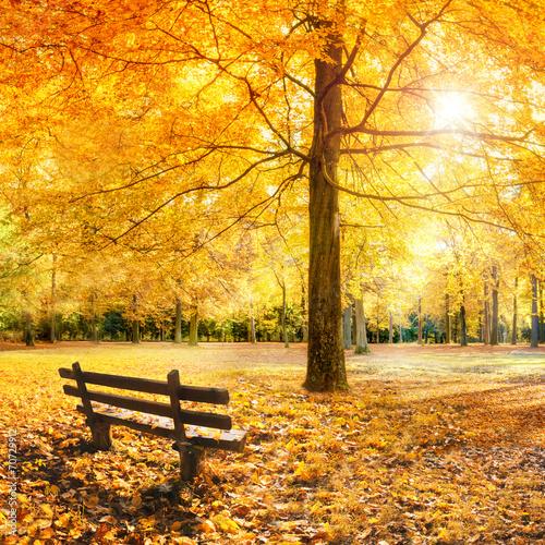 Leinwanddruck Bild Goldener Herbst im Wald