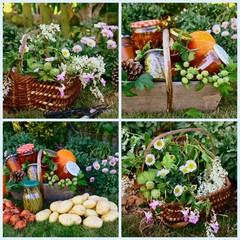 composition,légumes bio en conserve,dans le jardin