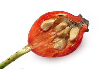macro of a half rose hip