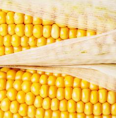 corn in a detail