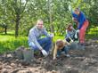 family harvesting potatoes in  garden