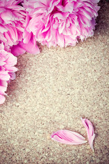 Pink peonies and petals on wooden background. Frame composition.