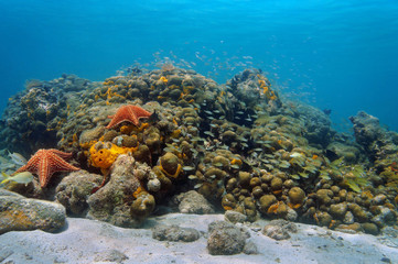 Underwater Caribbean coral reef and shoal of fish