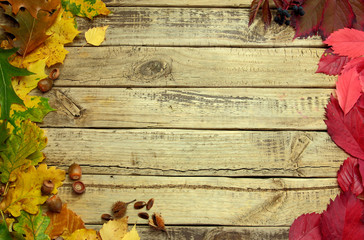 Autumn background with color leafs and acorns on wooden board