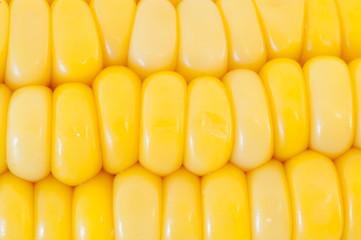 corn panicle