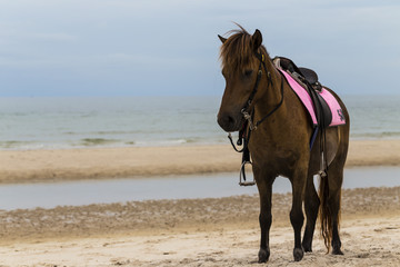 Brown horse on the beach