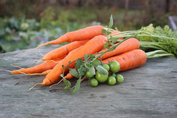 carrots  with green tomatoes on a branch