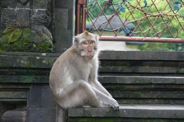 Monkey sitting on stone steps