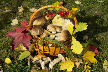 Корзинка с грибами.