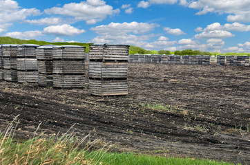 onions in wood crates in Michigan muck field