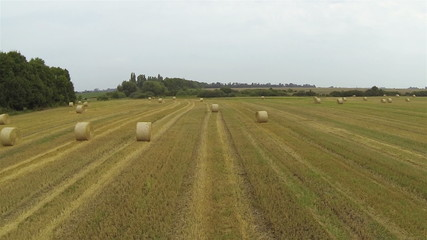 Over Picturesque haycocks on  yellow field. Aerial