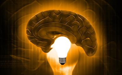 X- ray human brain top view