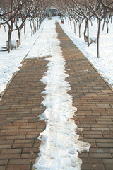 Winter Sidewalk