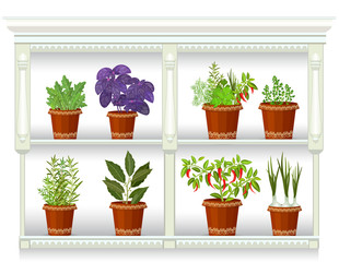shelfs with collection of herbs in a flowerpots at home